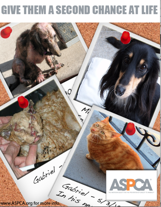 COLOR PSA FOR ASPCA
